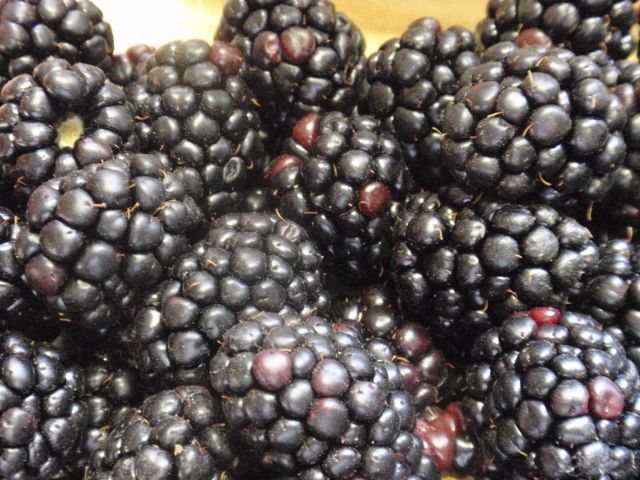 only $1.99 for a quart of blackberries!