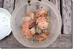 shrimp 023